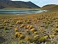 Lagunas Altiplanicas 1 - Atacama - Chile.jpg