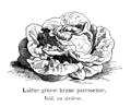 Laitue grosse brune paresseuse Vilmorin-Andrieux 1904.png