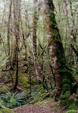 The bush - New Zealand's bush is variable in appearance, but generally the term connotates densely forested areas, like this one around Lake Gunn in Fiordland.