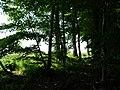Landschaftsschutzgebiet Waldgebiet bei Neuenkirchen Melle - Im Wald- Datei 3.jpg