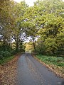 Lane on Bucklebury Common - geograph.org.uk - 1082007.jpg