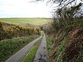 Lane to Lesnewth - geograph.org.uk - 730750.jpg