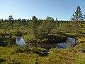 Lapland - Urho Kekkonen National Park - 20180728172248.jpg