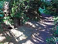Large Badger Sett - geograph.org.uk - 855461.jpg