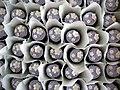 Lavender Wedding Cupcakes (3832150940).jpg