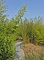 Le Jardin des Géants à Lille - Chemin des bambous - panoramio (2).jpg