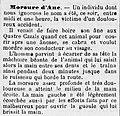 Le Petit catalan 07021886 - Morsure âne Perpignan.jpg