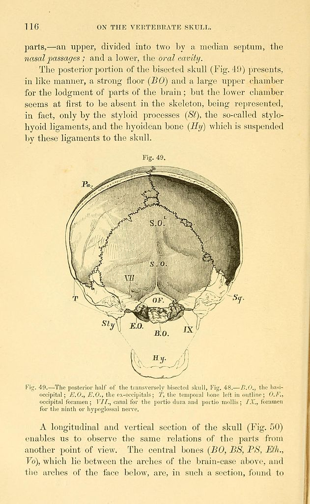 Luxury Comparative Anatomy Of Brain Gallery - Anatomy And Physiology ...