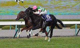 Leontes (horse) Japanese-bred Thoroughbred racehorse