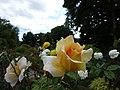 Les roses du thabor - panoramio (1).jpg