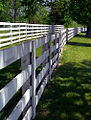 "Lexington Kentucky - Donamire Farm ""Miles Of White Fence"" (3571774430) (2).jpg"