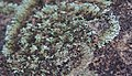 Lichen on Sandstone.jpg