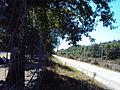 Lignes les aubrais orleans - montauban - entre orleans et vierzon - section 200.jpg
