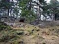 Linnasmäen linnavuori, Räntämäki.jpg