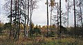 Lobnya, Moscow Oblast, Russia - panoramio (477).jpg