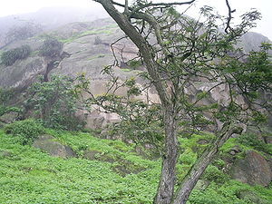 Lima Region - Lomas de Lachay