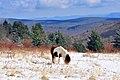 Lone Horse (7414957760) (2).jpg