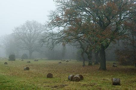 Loode oak forest in Saaremaa