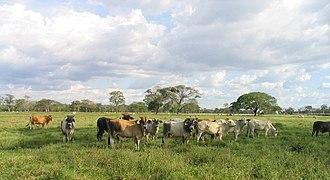 Climate of Venezuela - Image: Los Llanos