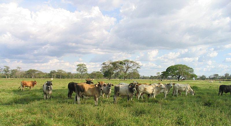 File:Los Llanos.JPG