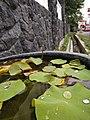 Lotus di tepi jalan.jpg