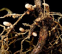 One Celled Organism >> Symbiosis - Simple English Wikipedia, the free encyclopedia