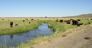 Lower-Crab-Creek-above-red-coulee-July.jpg