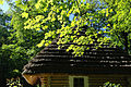 Lviv Szewczenkiw Hay SAM 2836 46-101-2056.JPG