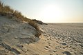 M^m Walking in the beach in Holland - Creative Commons by gnuckx - panoramio.jpg