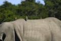 MPGR-Rhino.png