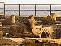 Mahabalipuram - panoramio (4).jpg
