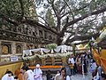 Mahabodhi temple and around IRCTC 2017 (77).jpg