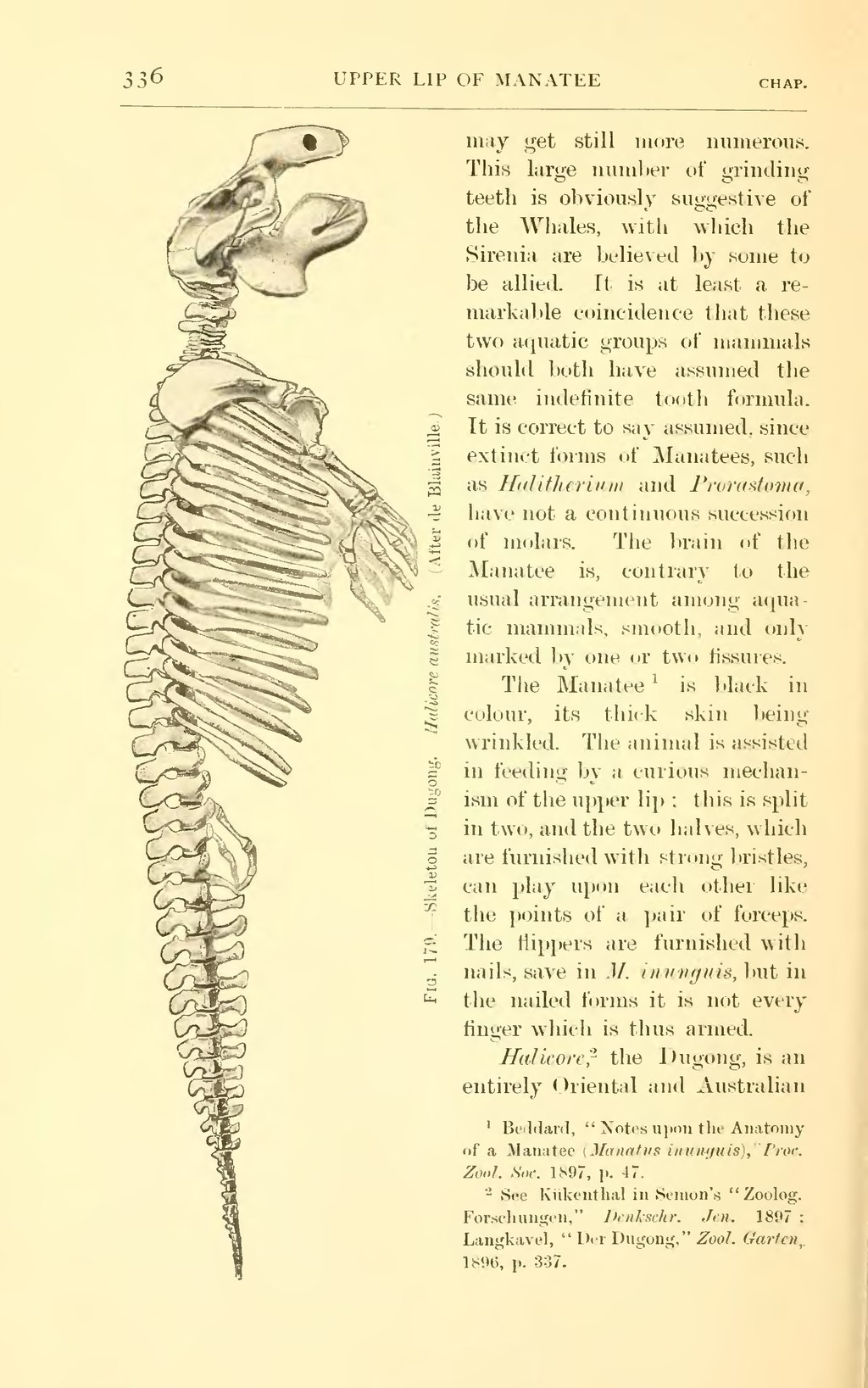Page:Mammalia (Beddard).djvu/356 - Wikisource, the free online library