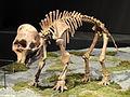 Mammuthus columbi (young) - Natural History Museum of Utah - DSC07258.JPG