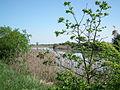 Marais de Seudre (5).JPG