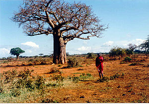 Ethnic groups - tribe at Kenya, Massai