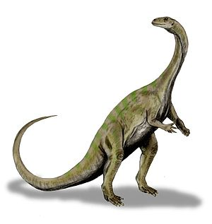 Massospondylus - Artist's impression of M. carinatus depicting the animal as bipedal