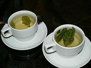 Coca tea Infusion of coca plant leaves