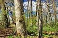 Matson's Woods (Revisit) (2) (14062022733).jpg