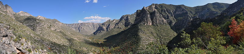 A panorama of McKittrick Canyon in early November viewed from the trail ascending to McKittrick Ridge above Pratt Cabin
