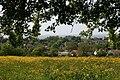 Meadow above Kibbear - geograph.org.uk - 1298274.jpg
