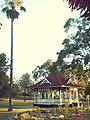 Memorial Park Gympie - the tallest palm in the park and the Bandstand. I hear it called the Rotunda a lot, although it's not round..... - panoramio.jpg