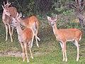Mentor Marsh Nature Preserve (9594892997).jpg