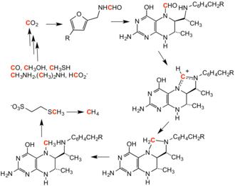 Methylation - Cycle for methanogenesis, showing intermediates.