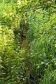 Mettingen Naturschutzgebiet Rote Brook 04.JPG