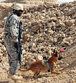 Military working dogs train for the mission DVIDS427406.jpg