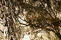 Miro Museum Shadows (2918374189).jpg