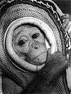 Miss Sam in her spacesuit