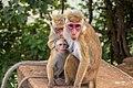 Monkey family photo.jpg
