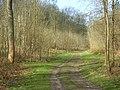 Moor Wood - geograph.org.uk - 768036.jpg
